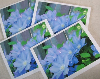 Four photo note cards - Floral note card set - Greeting cards - Gift card set  - Blank cards - Any occasion - Garden photos - Blue clematis