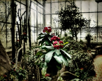 Art, Photography,Garden,Flower, Home Decor, Fine Art Print,Garden Photo, Conservatory Print,Arid Garden Botanical Print,Flower Print, Garden