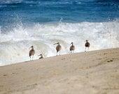 Ocean Shore Birds Crashing Waves Pacific Coast Photography  Beach Decor Nature Photography Nautical Decor Funny Animal Photo Fine Art Print