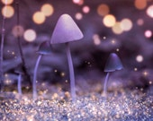 Nature Photography, Toadstools, Woods, Magical, Fairy lights, Autumn, Home Decor