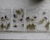 Violet Cornuta Flower Phone Cases.