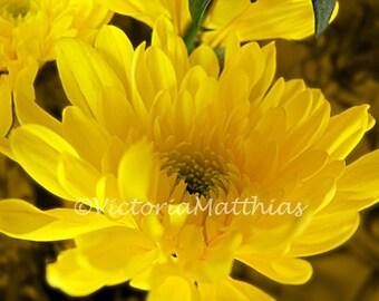 Yellow flower macro fine art photograph 5x7 matted 8x10