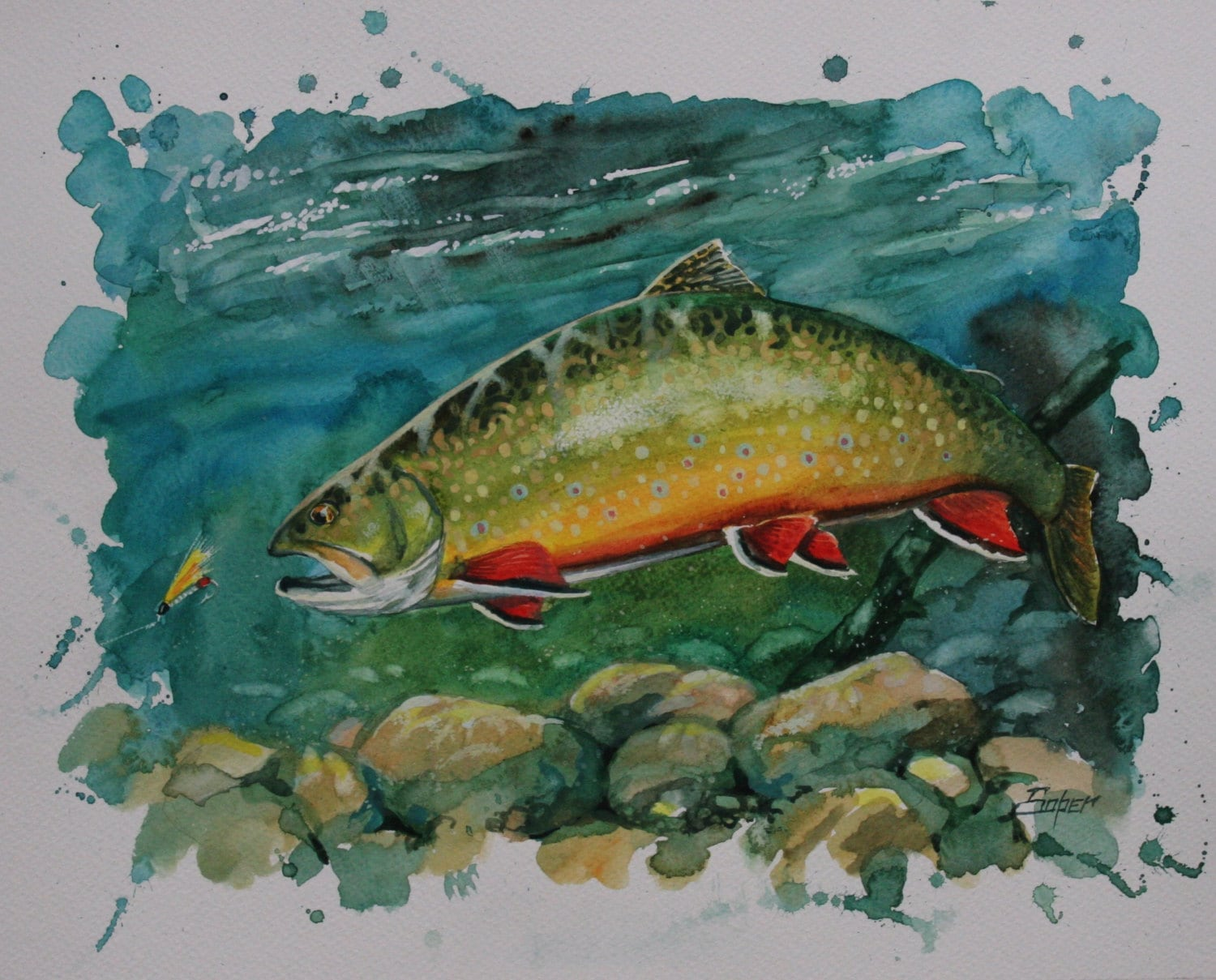 Fine art print of brook trout watercolor painting by patrick for Trout fishing in kansas