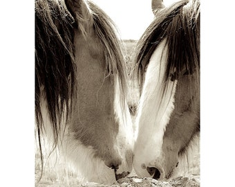 Horse Romance, Beautiful Clydesdale Horses, Scotland, Horse Photography, Scotland Photography, Horse Art Photography