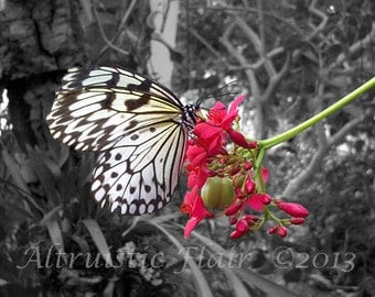 Charity of Your Choice, Butterfly atop a Pink Flower Black and White Pop of Color