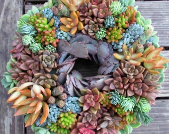 Succulent Wreath 10 inch in colors that POP