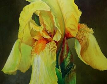 "Lemon Yellow Iris is a 12""x16"" original oil painting of a beautiful iris on gesseod board by me."