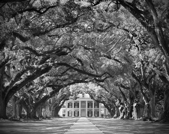 Beautiful and Romantic Oak Alley Plantation, LA