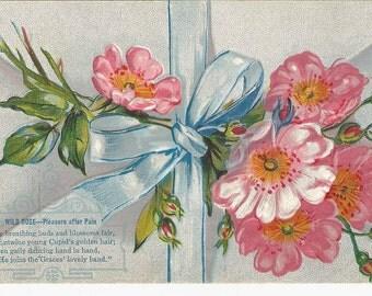 "Beautiful Vintage  Embossed Postcard  "" Wild Rose Pleasure after Pain"""