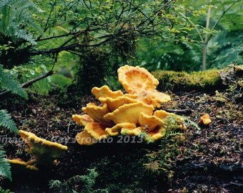 Olympic National Park - Hoh Rain Forest, Fungus, Coastal Forest, Spruce Nature Trail, Canvas, Art, Color Photography, Nature, Landscape