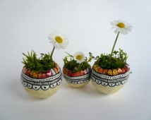 Small containers for plants-Small succulent pots