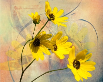 Yellow Daisy Nature Photography, Fine Art Nature Photography, Home Decor Photography, Yellow, Daisiy, Daisies, Delicate Photography