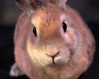 """Photograph Print """"Snuggle Time?"""" - Animal Photograpy - Rabbit - Bunny - Wall Art"""