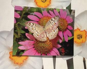 "Butterfly"" Postcard Riverhead, NY, Postcards"
