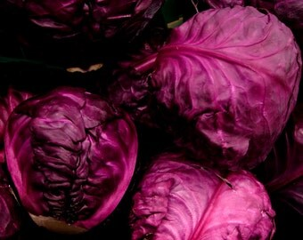 10 Red Cabbage or purple cabbage, red kraut, or blue kraut seeds