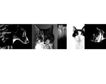Cats and Dogs Photographic Print