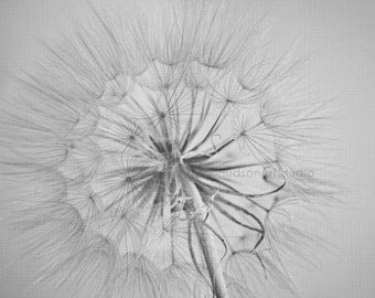 Dandelion Photography wall decor 8x10 11x14 16x20 fine art print black and white botanical print Home decor minimalist flower wall art print