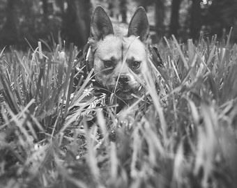 Free in her wildness - Black and white dog photography print