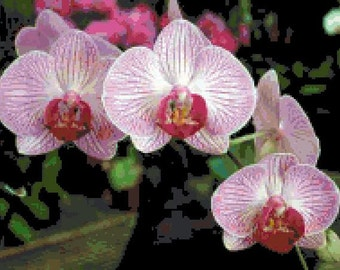 Orchids 1 Cross Stitch Chart