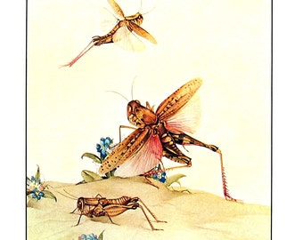 Italian Locusts - Fabre's Book of Insects - 1976 Vintage Book Page
