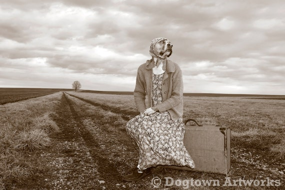 Long Road Home, large original photograph of Boxer dog wearing clothes waiting by a lonely roadside