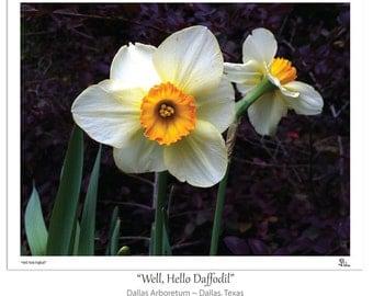 daffodil photograph, flower photography, white daffodils, botanical art print, floral decor, nursery art