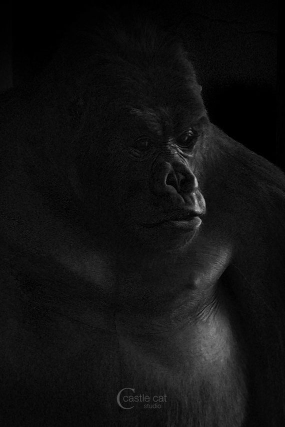 https://www.etsy.com/ca/listing/186926075/gorilla-8x12-photography?ref=shop_home_active_1