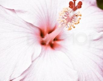 Tropical hibiscus Photography pink lavendar stamen pistil yellow red purple bloom stigma petals flower blossom bloom princess fine art photo