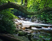 Mountain Stream in The Great Smokey Mountains National Park Tennessee No.547 - A Wilderness Landscape Photograph