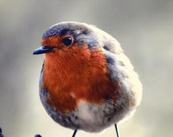 Robin Fine Art Photography Download