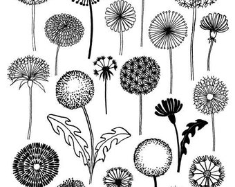 Dandelions, limited edition giclee print