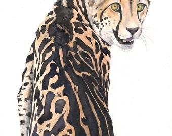 Cheetah Watercolor Painting- animal art- print of watercolor painting 5 by 7 print
