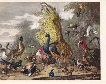 Vintage Melchior de Hondekuter (Poultry Yard) Postcard - 1980s, Soviet Artist Publ.