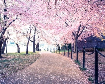 Washington Dc Wall Art dc cherry blossom photo washington dc print cherry blossom