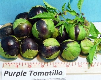 Purple Tomatillo Heirloom Seeds Rare Non GMO