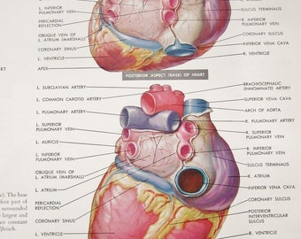 The Ciba Collection of Medical Illustrations Vol.5 The Heart Frank H Netter Book w/Plastic Jacket 1969 Edition