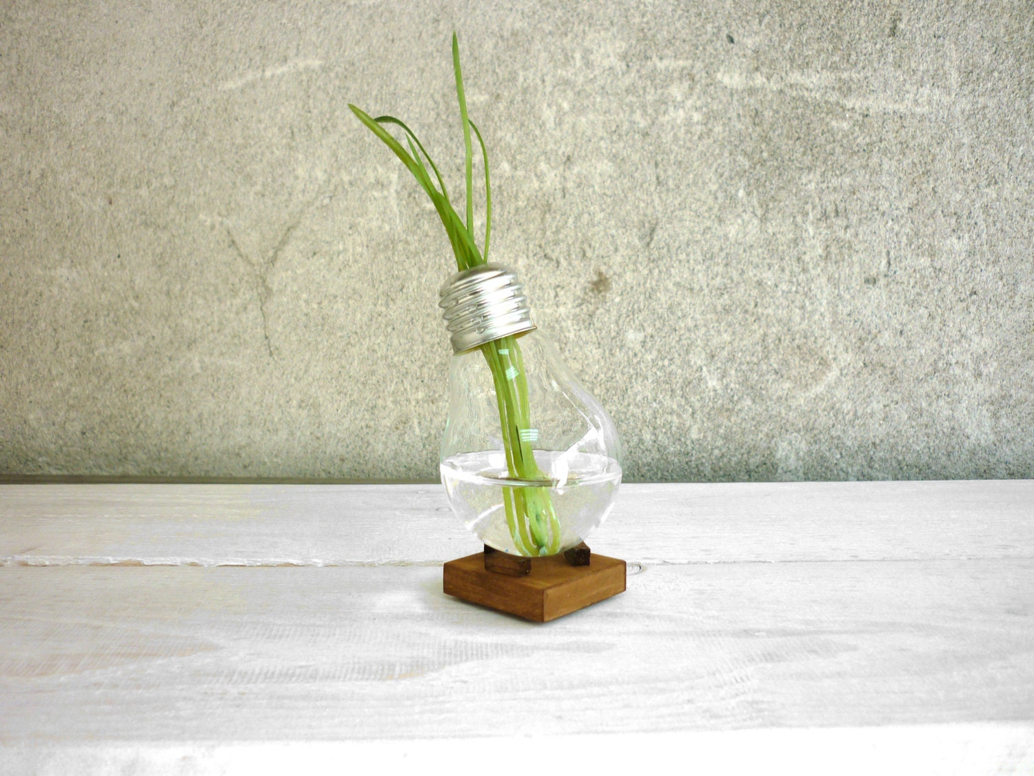 bud vase alpha glass vase miniature vase plant. Black Bedroom Furniture Sets. Home Design Ideas