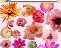 Floral clip art flowers - Photo flowers Clip art Real flowers flower clipart Printable clip art Pink Floral clipart Flowers Digital clipart