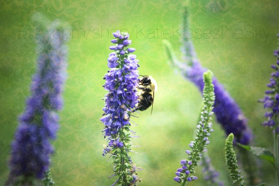 "Fine Art PRINT "" Honey Bee "" Nature Photography Love Summer Demask Decor Wall Art Fuzzy Buzzing Cute Spring Bumble Purple Flowers Nursery"