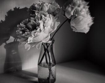 Black&White Flower Photography, Peonies, Flower Print, Modern Home Decor, Bedroom Wall Art, Bath Art, Spa Art, Office Art, Square Format