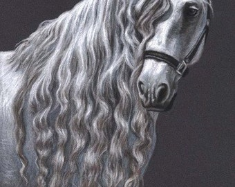 Andalusian Horse - Fine Art Print