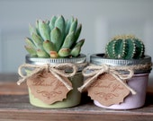 Succulent min mason jar set of 2, gift, wedding gift, birthday gift, house warming gift , mothers day gift - READY TO SHIP