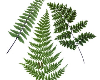 "Vintage Botanical Fern Temporary Tattoo - ""Fernetic"""