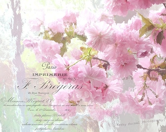 Pink Cherry Blossom Prints, Shabby Chic Floral Wall Art, Pink Blossoms Prints, Cherry Blossom Flower Prints, Pink Blossoms Floral Art Prints