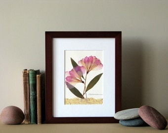 "Pressed flowers print, 8"" x 10"" matted, Alstroemerias, soft pink flower art, botanical no. 036"