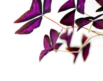 Digital download - photography decor art wall decor purple leaves plant flower white colourful