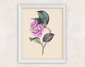 Camellia Rose Botanical Print - 8x10 Pink Flower Art - Wall Art Prints - Antique Prints - Home Decor - Botanical Art Print -  Item #140