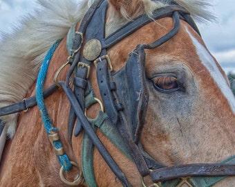 Horse Photography - Fine Art Photograph - Nature Photography - Farm Horse - Blue - Brown - Nature Print