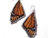 Real Viceroy Butterfly Wings Earrings - Black and Orange Dangle Earrrings - Boho Fall Fashion