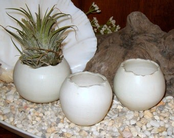 set of 3 earthy little off white porcelain ceramic air plant pods or containers, cactus succulent pots little orbs with organic edges